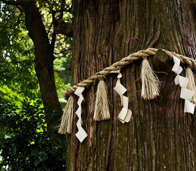 bio_albero_giapponese